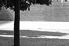 . (just.Luc) Tags: stairs trappen escalier spain spanje espagne españa spanien andalusië andalucía andalusien andalousie andalusia sevilla seville séville siviglia tree arbre boom baum bn nb zw monochroom monotone monochrome bw árbol albero
