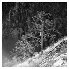 Muradym (*Irshat*) Tags: analog analogphotography autocord acros100 fuji fujiacros100 bwfilm baskiria muradym minoltaautocord