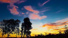 2409 coucher de soleil 2 (sebastien.demotier) Tags: coucher de soleil arbre tree shadow deep blue sunset sky cloud champlieu picardie france