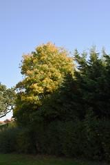 DSC_1887 (PeaTJay) Tags: nikond750 reading lowerearley berkshire gardens outdoors nature flora fauna plants flowers trees shrubs bushes foliage