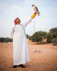 The Emirati Bird of Prey (Dubai Desert Conservation Reserve, United Arab Emirates 2017) (Alex Stoen) Tags: alexstoenphotography geotagged leicamtyp240 ngexpeditions summiluxm35mm travel uae vacation