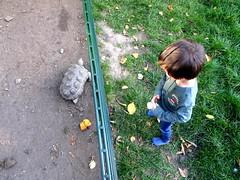 born_057 (OurTravelPics.com) Tags: born max with tortoise kasteelpark zoo