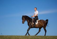 Basim_OS180214 (OliverSeitz) Tags: elbasim wachlarz elda arabian vollblutaraber pferd tier
