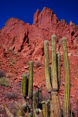 Cactus (Jungle_Boy) Tags: bolivia bolivie southamerica travel 2018 landscape nature scenery mountains red colour color desert stark beautiful cactus
