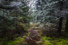 Frosted Forest Path. Monongahela N.F. (Oct. 14, 2018) (Thomas Cluderay) Tags: photography westvirginia wva forest nature outdoors backpacking outside publiclands landscape landscapephotography autumn fall monongahela nationalforest monongahelanationalforest wilderness moss frost snow mountains naturephotography
