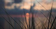 Sand dune sunset (loewx017) Tags: sunset sanddune dune sand grass light bright flickr lake clouds nature