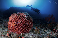 C A N Y O N (Randi Ang) Tags: gili air giliair lombok indonesia barrel sponge coral spongecoral underwater scuba diving dive photography wide angle randi ang canon eos 6d fisheye 15mm randiang wideangle