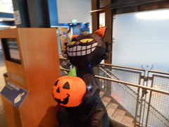 DSCN6312 (mestes76) Tags: 102917 duluth minnesota halloween aquariums greatlakesaquarium scariumattheaquarium decorations inflatables blackcat pumpkin