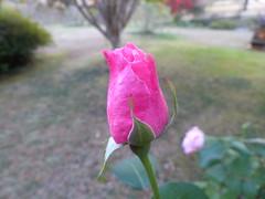 Thème du mois d'octobre: bokeh (Marie-Hélène Cingal) Tags: france sudouest aquitaine nouvelleaquitaine paysdorthe cagnotte landes 40