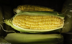 Sweet corn (Thad Zajdowicz) Tags: zajdowicz pasadena california usa outdoor outside availablelight leica lightroom corn sweet color green yellow colour farmersmarket food vegetable grain maize vignette