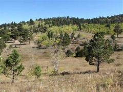 Colorado, Rails to Trails Hike, Landscape (Mary Warren 11.6+ Million Views) Tags: colorado rockymountains foothills nature scenery flora trees green foliage landscape