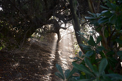 Solar rays and morning mist through the bushes of Foz do Douro, in Porto (eduardovales) Tags: nikonflickraward