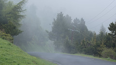Sur le Col de Mantet (RIch-ART In PIXELS) Tags: france py pyrénéesorientales occitanie landscape paysage fujifilmxt20 xt20 fog mist brouillard road col mountainpass tree forest grass languedocroussillon