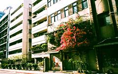 (andidrew) Tags: fujifilm klasse klassew fujifilmklassew 業務用 業務用100 iso800 135film 135negative colornegative taipei taiwan 2018 april
