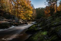 Autumn (Thomas Karlsson Photos) Tags: water trees blue autumn river eos760d blå träd skog vatten höst colours färger orange lake eos 760d