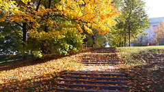 Autumn Fairytale 01 (rimasjank) Tags: vilnius lietuva lithuania autumn stair