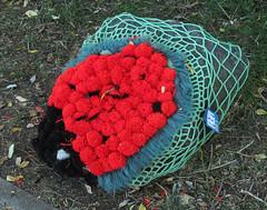 Woll-Lust VI (MKP-0508) Tags: häkeln crocheter crochet behäkeltesteine steine stones cailloux urbanart kunstimöffentlichenraum wolllust wolle wool laine rüsselsheim festung festungrüsselsheim opelvillen