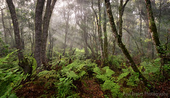 Valley of Ferns Misty Sunrise (Panorama Paul) Tags: paulbruinsphotography wwwpaulbruinscoza southafrica southerncape gardenroute knysnaforest valleyofferns indigenousforests nikond800 nikkorlenses nikfilters