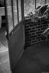 Bain de soleil (Mathieu HENON) Tags: leica leicam m240 noctilux 50mm monochrome laphotodulundi nb bnw noirblanc blackwhite france paris 16ième arrondissement serres auteuil bain soleil plante briques porte ouverte verrière atelier