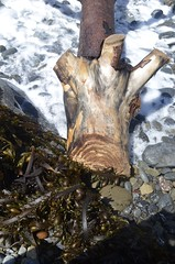 washed up (Who am I today?) Tags: cacoastaltrail piratescove