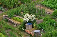 298 août 2018 - Auvergne, Le Puy-en-Velay, jardin potager (paspog) Tags: france auvergne hauteloire lepuyenvelay août august 2018 jardin potager garden kleinesgarten