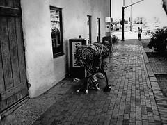 tempe PB027645 (m.r. nelson) Tags: tempe arizona az america southwest usa mrnelson marknelson markinaz streetphotography urban urbanlandscape artphotography documentaryphotography blackwhite bw monochrome blackandwhite grainy highcontrast noiretblanc