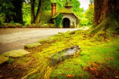 Fairy House (tetyanaohare) Tags: old house newjersey nikonflickraward nikon photography harmony tranquil peaceful scenic travel leisure outdoors landscape nature dreamy vibrant colorful green woods park path trees forest