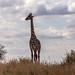 Safari Flickr (37 of 266)