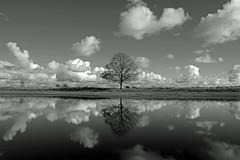 Veenland Skies (Andreas Steffen) Tags: veenland holland baum tree lake wasser water see wolken himmel schwarzweis bw fuji fujifilm xt20 clouds