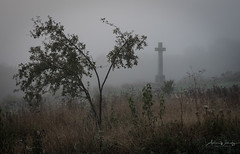 365-2018-270 - The apple tree and the cross (adriandwalmsley) Tags: shawforddown warmemorial mist spiderweb