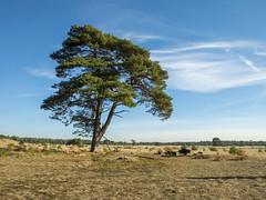 Hoge Veluwe - aan de voet van de Fransche Berg (ome.henk) Tags: amsterdamhenkwieland herfst hogeveluwe landal miggelenberg veluwe bomen bos landscape landschap 2018 kootwijk burgers natuur zand dieren