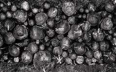 Years (Svendborgphoto) Tags: old monochrome sigma nikon nikondigital denmark d800 dof detail woods 2470ex bw blackandwhite