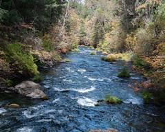 Stream_120001 (gpferd) Tags: plant rock stream tree water burney california unitedstates us