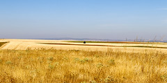 Vacances_6016 (Joanbrebo) Tags: fuentecambrón castillayleón españa es camposdecastilla campo fields nature naturaleza natura landscape paisaje paisatge canoneos80d eosd efs1855mmf3556isstm autofocus