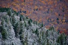 Fall Becomes Winter (efkjr79) Tags: forest tree hike hiking cascademountain newyork adirondacks