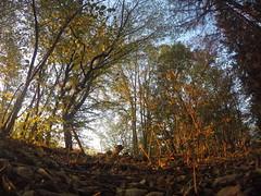 Morgens im Wald (shortscale) Tags: wald sonnenaufgang
