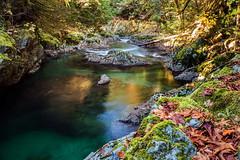 201810-bc-ln-shaw creek-0834 (outdoorsanytime72) Tags: shawcreek cowichanvalley vancouverisland creeks