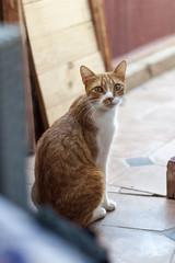 Hola Micifuz (Guillermo Relaño) Tags: marrakech marruecos marocco maroc nikon d90 guillermorelaño gato cat