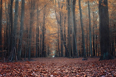 In the woods (michel1276) Tags: wald herbst forest woods trees autumn nature halternamsee germany deutschland bäume baum sony sonya7iii porst5512 porstcolorreflex5512 porst manualfocus vintagelens