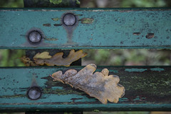 (nadiaorioliphoto) Tags: autumn autunno colours objects foglie leaves green verde