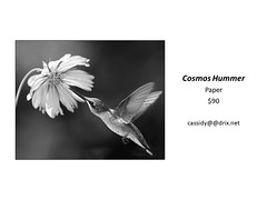 "Cosmos Hummer • <a style=""font-size:0.8em;"" href=""https://www.flickr.com/photos/124378531@N04/45363485261/"" target=""_blank"">View on Flickr</a>"