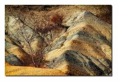Ravin E1 Csc1 Bd  Rd1 IMG_2014-2 (thierrybarre) Tags: badlands landscape contraste couleur terre érosion montagne collines graphisme arbres hiver