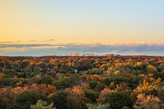 Tree Cover (Stefen Acepcion) Tags: nature landscape photography canada fall colourfulcolorful tree trees new afternoon skyline goldenhour dusk mississauga urban oakville