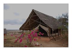 Lualenyi Camp Mwatate Kenya (Claire PARMEGGIANI Photos) Tags: africa africangallery africanlife africanwildlife eastafrica gamedrive kenya safari tsavo wildlife wildafrica