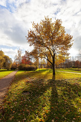 Autumn sunshine. (fedoseenko) Tags: санктпетербург россия colour природа beauty blissful loveliness beautiful saintpetersburg sunny art shine dazzling light russia day green park peace garden blue white голубой небо лазурный color sky pretty sun пейзаж landscape view heaven mood summer serene golden gold gate colours picture road tree grass nature alley trees field autumn outdoors old wood зелень зленое тропинка trail 5dmarkii flickrfriday orange