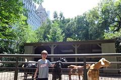 Central Part - Tisch children's zoo (domit) Tags: central park tisch children zoo newyork new york usa isaac goats feeding