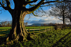 Distant Pendle (scottprice16) Tags: england lancashire clitheroe ribblevalley pendlehill view frame trees path outdoors hills southpennines morning sunshine colour winter 2018 december grass clouds fence nikon nikonaw1 nikkoraw11275 fields