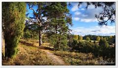 Gesichter der Heide (Don111 Spangemacher) Tags: niedersachsen natur naturschutzgebiet norddeutschland naturpark niederhaverbeck himmel heidekreis heide herbst landschaft lüneburgerheide wolken wege wacholder wanderwege bunt bispingen wald