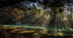 Autumn rays (paullangton) Tags: autumn colour green blue trees sun rays field woodland shed hertfordshire light leaves landscape countryside shadow canon 5dmk3