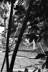 Como, Bocciofila Combattenti, 2018 (sirio174 (anche su Lomography)) Tags: playground playgrounds parcogiochi parchigiochi giochi como italia italy canonae1program ilfordfp4 bocciofila ristorantecombattenti bocciofilacombattenti
